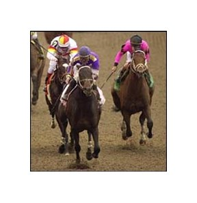 Fifty Stars, leading Millennium Wind (left) and Dollar Bill (right) to the finish line in his Louisiana Derby victory.