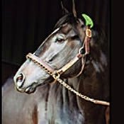 War Emblem Headed to Japan to Stand at Stud in 2003