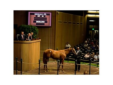 Hip 46 Distorted Humor-Half Queen sold $625,000 at the Keeneland Yearling Sales.