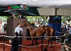 The $2.1 million sale-topper; Hip #55 (colt; Street Cry - Sage Cat by Tabasco Cat).