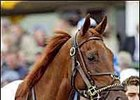 Funny Cide faces golden opportunity in Saturday's Jockey Club Gold Cup.