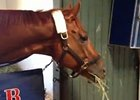 Breeders' Cup - Wise Dan Settles In