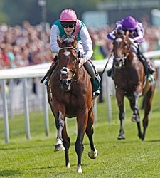 Unbeaten Frankel Headed to Champion Stakes