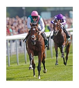 Frankel remained undefeated with this win in the Juddmonte International.