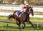 Black Caviar cruises in the  Goodwood Stakes for win number 21.