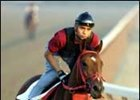 Afleet Alex: 'The One That Got Away'