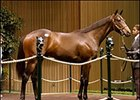 Forestry colt tops fourth day of yearling sale.