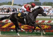 Chelokee Clashes With Strong Field in Northern Dancer