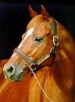 Affirmed Exhibit Opens at Kentucky Horse Park