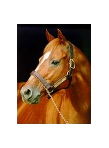 "Affirmed<br><a target=""blank"" href=""http://www.bloodhorse.com/horse-racing/photo-store?ref=http%3A%2F%2Fpictopia.com%2Fperl%2Fgal%3Fprovider_id%3D368%26ptp_photo_id%3D408398%26ref%3Dstory"">Order This Photo</a>"