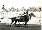 Buckpasser on the rail winning the Chicken Flamingo.