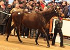 Diary, Lot 1650 at the Tattersalls December sale.