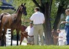 Prospective buyer examines a yearling prospect offered in the Keeneland September sale, which begins Monday and runs through Sept. 25.