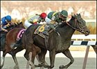 Dixie Talking (6) wins the Cicada, Saturday at Aqueduct.