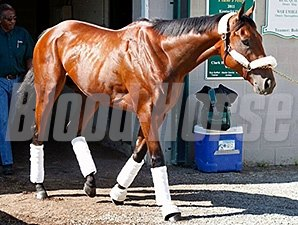 American Pharoah leaves Churchill Downs for Pimlico Race Course.