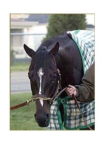 Ten Cents a Shine, worked Sunday at Churchill Downs.