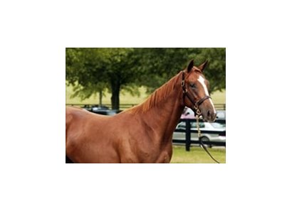 MacArthur Causeway (aka Hip #393) among hot prospects at FTK sale.