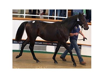 Tattersalls October Sale