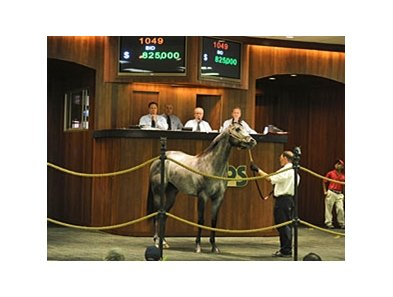 Hip 1049, colt; Macho Uno - La Defense by Wild Again, brought $850,000 to top the Ocala Breeders' Sales Company's 2011 Spring Sale of 2-Year-Olds in Training.