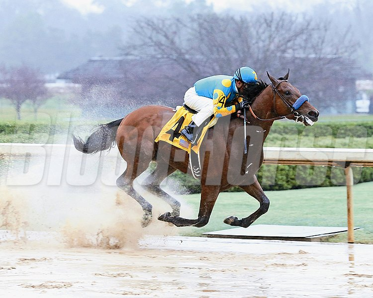 AMERICAN PHAROAH The Rebel Stakes - GII - The 55th Running Oaklawn Park     Hot Springs, Arkansas March 14, 2015    Race #10 Purse $750,000 1-1/16 Miles  1:45.78 Zayat Stables, LLC, Owner Bob Baffert, Trainer Victor Espinoza, Jockey Madefromlucky (2nd) Bold Conquest (3rd) $2.80  $2.20  $2.10 Order of Finish - 4, 2, 5, 1 Please Give Photo Credit To:  / Coady Photography