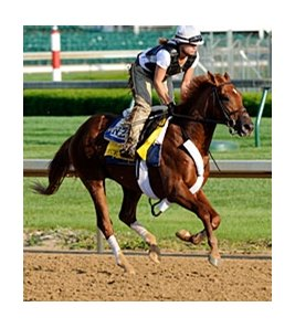 "Florida Derby winner Ice Box worked 4 furlongs in :48.40 at Churchill Downs on April 16.<br><a target=""blank"" href=""http://www.bloodhorse.com/horse-racing/photo-store?ref=http%3A%2F%2Fpictopia.com%2Fperl%2Fgal%3Fprovider_id%3D368%26ptp_photo_id%3D8895684%26ref%3Dstory"">Order This Photo</a>"