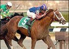 Cigar 'Cap winner Lion Tamer is Louisiana bound.