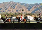 European Breeders' Cup contenders training at Santa Anita Park