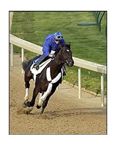 The Cliff's Edge, in fast workout at Churchill Downs Monday.