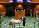 Hip 448 sold for $330,000 at the Saratoga Sale.