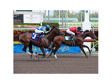 "Nicanor (left) finished 2nd to Glittermans Cartel.<br><a target=""blank"" href=""http://www.bloodhorse.com/horse-racing/photo-store?ref=http%3A%2F%2Fpictopia.com%2Fperl%2Fgal%3Fprovider_id%3D368%26ptp_photo_id%3D7958723%26ref%3Dstory"">Order This Photo</a>"