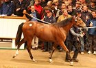 Filly by George Washington brought 320,000 guineas at the Tattersalls October yearling sale.