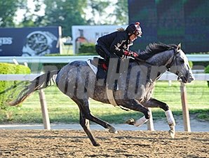 Ironicus - Belmont Park, May 22, 2015.