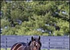 Two Mares in Foal to Mineshaft