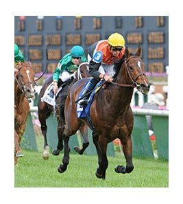 "Banned won his last race, the American Turf, by 4 1/2-lengths.<br><a target=""blank"" href=""http://www.bloodhorse.com/horse-racing/photo-store?ref=http%3A%2F%2Fpictopia.com%2Fperl%2Fgal%3Fprovider_id%3D368%26ptp_photo_id%3D9516724%26ref%3Dstory"">Order This Photo</a>"