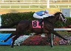 Affirmatif easily won his debut at Gulfstream Feb. 28.