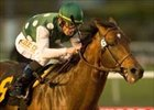 Native Diver Handicap winner Saint Stephen is retired to stud in Alberta, Canada