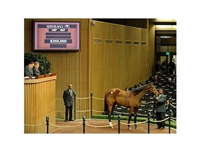 Hip #467; Age of Humor (Distorted Humor - Age of Silver by Silver Deputy) brought $350,000 at the Jan. 12 session of the Keeneland January horses of all ages sale.