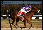 Saratoga Blues Remains Undefeated with Whirlaway Win