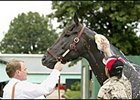 Trainer Jason Orman, left, holds Rock Hard Ten while groom Jose Mejia gives him a bath Thursday at Monmouth Park.