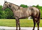 Maria's Mon, who stands at Pin Oak Stud, zoomed to second on the 2001 general sire list after Monarchos' victory in the Florida Derby.