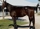 The 3-year old filly Charming, the first foal out of Take Charge Lady (shown), won her debut at Keeneland on April 10.