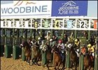 Horses break from the gate in the first race at Woodbine as the track unveiled its synthetic surface Wednesday.