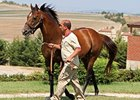 Victory Gallop in Turkey