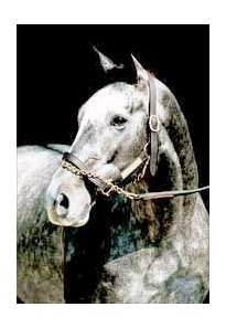 "Silver Charm, 1 of 8 new Hall of Fame inductees.<br><a target=""blank"" href=""http://www.bloodhorse.com/horse-racing/photo-store?ref=http%3A%2F%2Fpictopia.com%2Fperl%2Fgal%3Fprovider_id%3D368%26ptp_photo_id%3D1301443%26ref%3Dstory"">Order This Photo</a>"