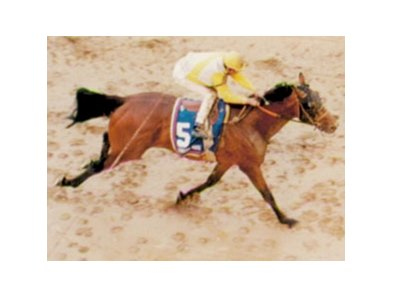 Strodes Creek finished 2nd in the 1994 Kentucky Derby.