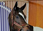 Zenyatta