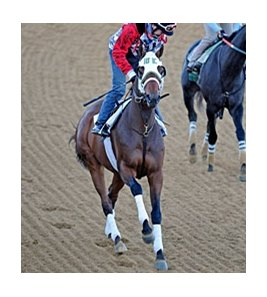 Mine That Bird