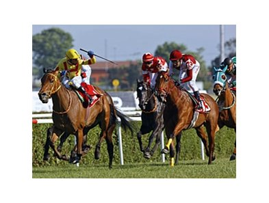 Balcibin, a daughter of Strike the Gold, won the Turkish Oaks.
