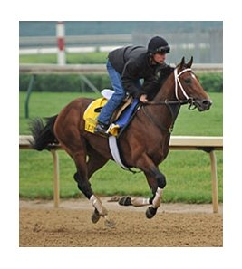 "Alpha<br><a target=""blank"" href=""http://photos.bloodhorse.com/TripleCrown/2012-Triple-Crown/Works/22611108_LR3wcn#!i=1823324260&k=RS49vVB"">Order This Photo</a>"