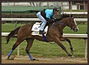 Harlan's Holiday, Sunday Break  Work For April 13 Stakes